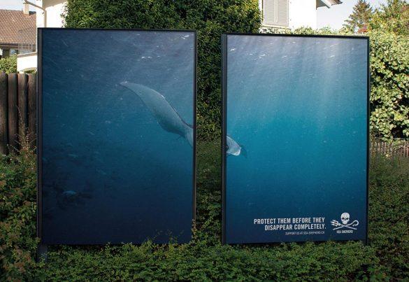 Sea Shepherd: Sea Shepherd Switzerland