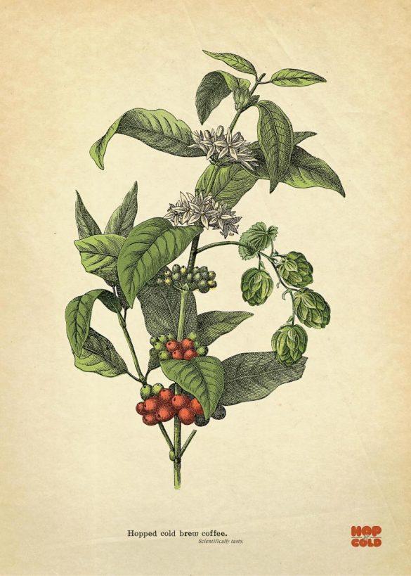 Hop & Cold: Scientifically tasty