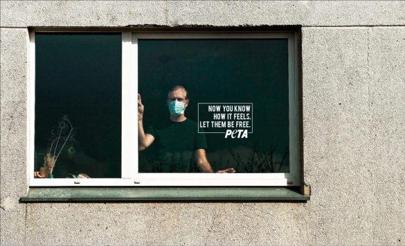 PETA: In Captivity