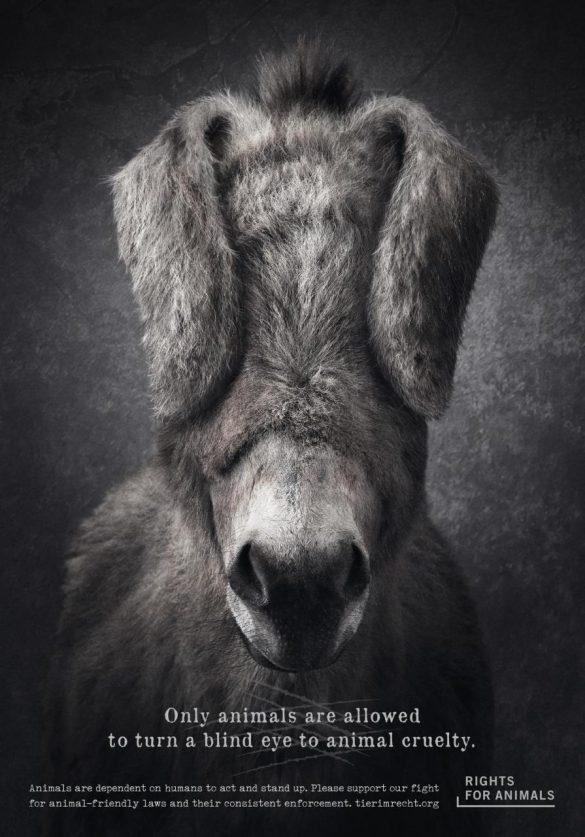 Foundation Tier im Recht: Don't turn a blind eye to animal cruelty