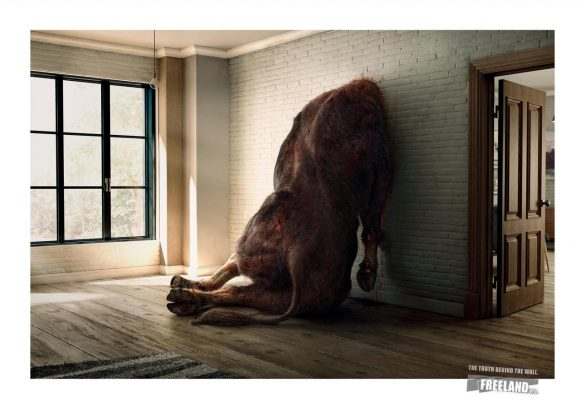 Freeland Foundation: The Truth Behind The Wall: Boar, Deer, Kouprey